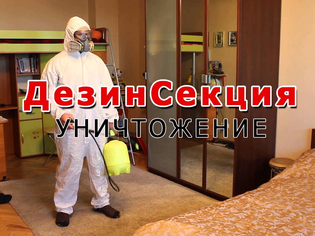 ДезинСекция - уничтожение насекомых
